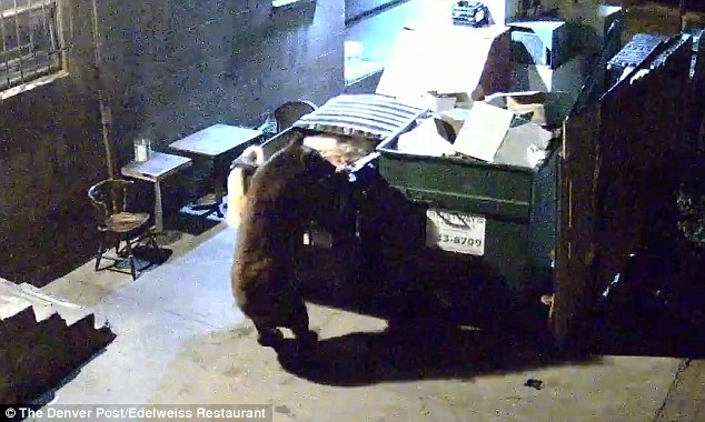 Bear raids takeaway dumpster for food